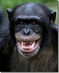 chimpanze_pantroglodyte