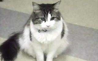 gatooscar
